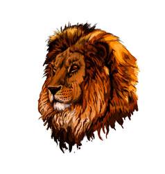 Lion head portrait from a splash watercolor vector