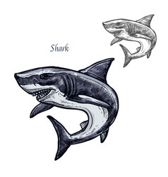Shark fish isolated sketch icon vector