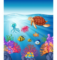 Turtle and fish swimming underwater vector image