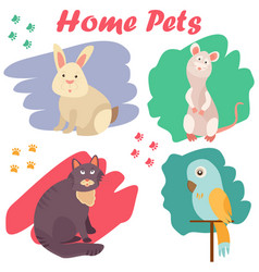 bright images of domestic animals cat parrot rat vector image vector image