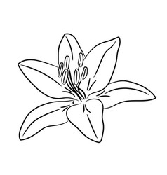 bud flower with white petal from the contour vector image