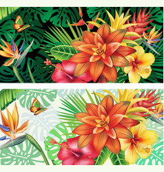 cards from tropical plants and flowers vector image