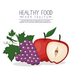 delicious fruits healthy food vector image
