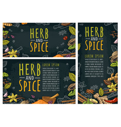 herb and spice handwriting lettering set vector image