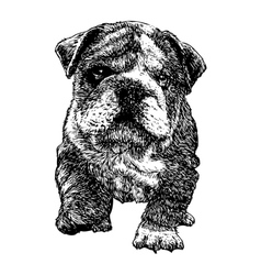 Puppy bulldogs 04 vector image