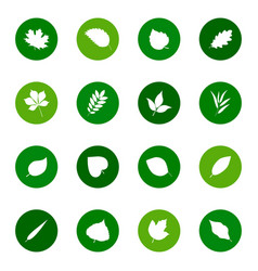set of leaf icons on color backgrounds vector image