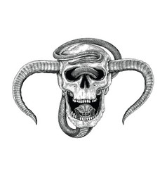 snake with human skull hand drawing vintage vector image