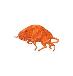 European Bison Charging Drawing vector image