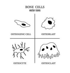 Bone cells osteon linear style vector