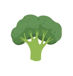 Broccoli vegetable vegetarian healthy food vector