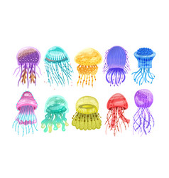 collection of gorgeous marine animals - jellyfish vector image