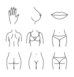Female body parts linear icons set vector