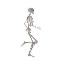 Side view human anatomically detailed skeleton vector