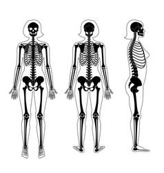 Woman skeleton anatomy vector