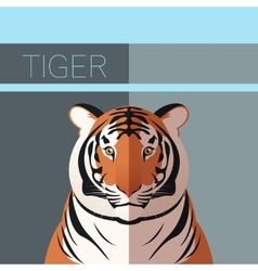 Tiger flat postcard vector image vector image