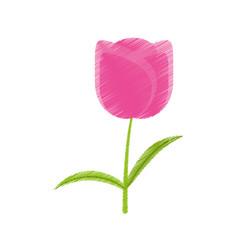 drawing tulip flower romantic plant vector image