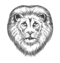 Hand Drawn Lion Head vector image vector image