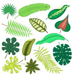tropical leaves plant tropic leaf foliage vector image