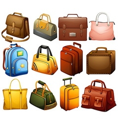 Collection of different bags vector image
