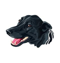 Head dog labrador retriever and border collie vector