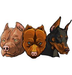 heads dogs pitbull dobermann bulldog vector image