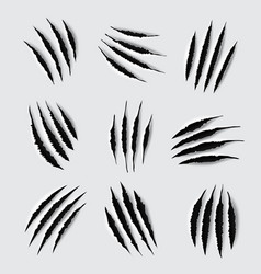 scratches and claw marks animal paws vector image