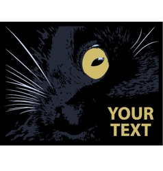 cat on a black background vector image