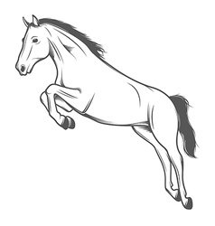 Jumping horse isolated on white background vector image vector image