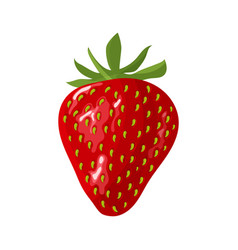 fresh red strawberry on white background vector image