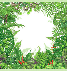 tropical plants frame vector image