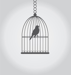 bird grey vector image