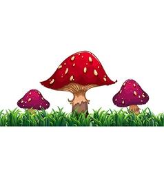 Three mushrooms vector image