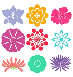 Floral templates vector image