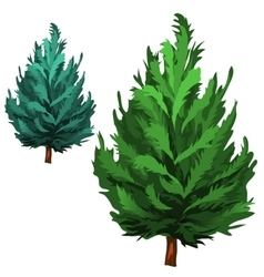 Green spruce in cartoon style on white background vector image