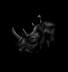 portrait of a rhinoceros head on a black vector image