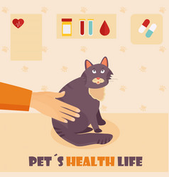 Veterinary medicine hospital doctor with cat vector