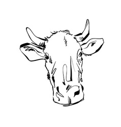 Black and white hand drawn cow of a cow vector