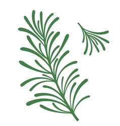 Rosemary vector image