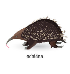 Echidna covered with coarse hair and sharp needles vector