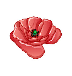 poppy flower icon cartoon style vector image