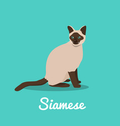 siamese cat on sky blue background vector image