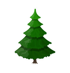 Christmas tree spruce evergreen tree vector