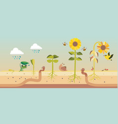 from seed to seed plant growth proccess vector image