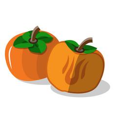 Persimmon fruit flat icon vector