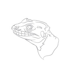 portrait of a lizard lines vector image