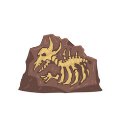 remains prehistoric animal aarchaeological vector image