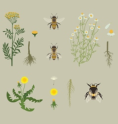 Pattern with Bees and Yellow Flowers vector image