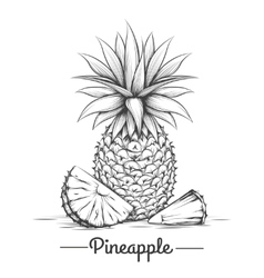 Doodle sweets pineapple vector image