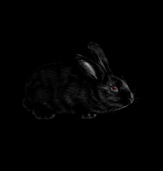 portrait of a rabbit on a black background vector image