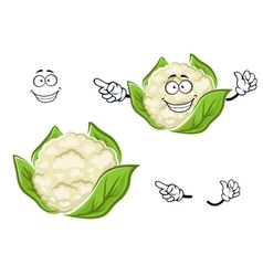 Ripe cartoon cauliflower vegetable with leaves vector